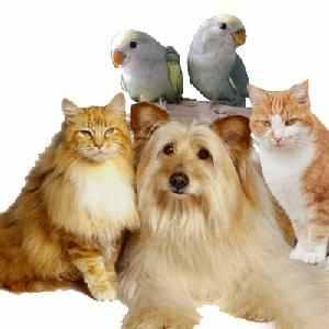 Éjjel-nappal működő állatorvosi rendelő a XVIII. kerületben Kundisz 99 Kft. állatorvos állatgyógyászat állatklinika állatkórház állategészségügyi ellátás Lőrincen XVIII.kerület